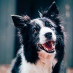 Dental Health For Your Dog