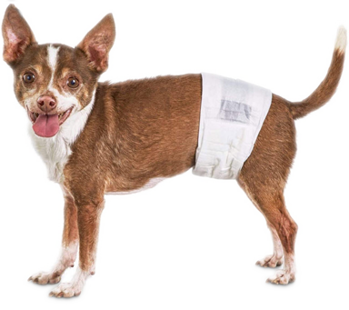Image of Dog in Wrap Diaper- GorjessPets.com
